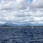 Los Frailes, Bonanza Bay, and Whales